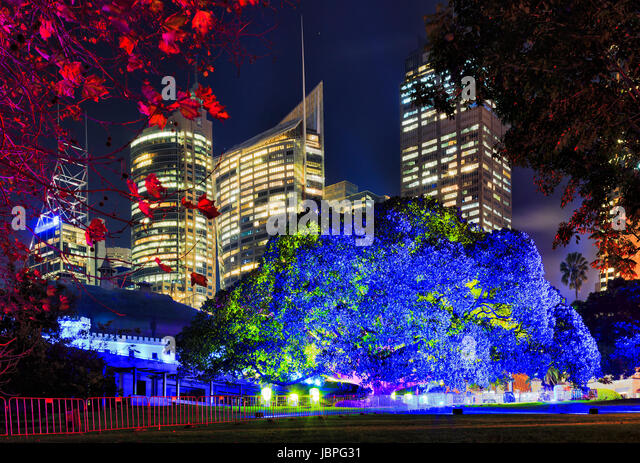Sydney Royal Botanic gardens big tree brightly illuminated in blue light against CBD skyscraper towers during Vivid - Stock Image