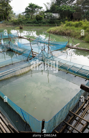 Fish ponds stock photos fish ponds stock images alamy for Stocked fishing ponds near me