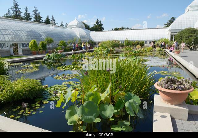 Pond, New York Botanical Garden, Bronx, NY   Stock Image
