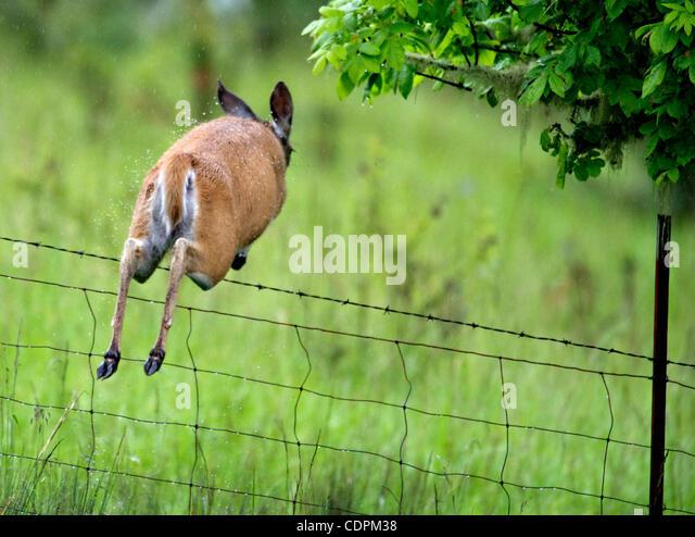 Roseburg Deer Stock Photos Images