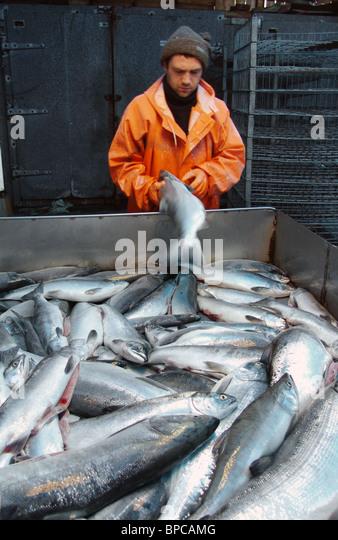 Buimistrov stock photos buimistrov stock images alamy for Salmon fishing season