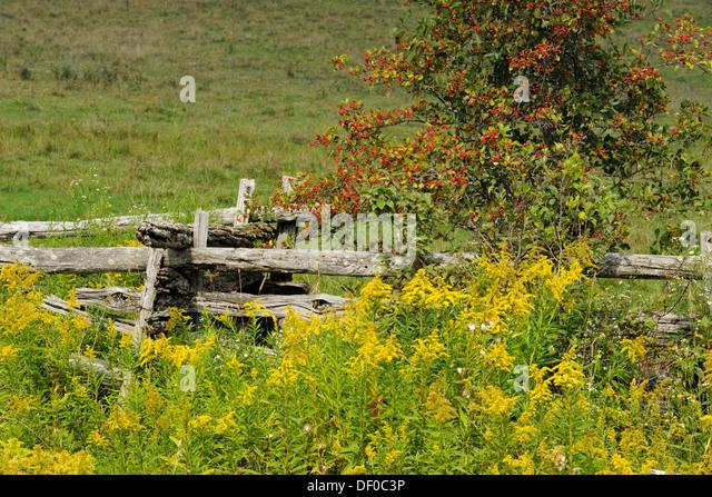Split rail fence rustic stock photos split rail fence rustic stock images alamy - Rustic wood fences a pastoral atmosphere ...