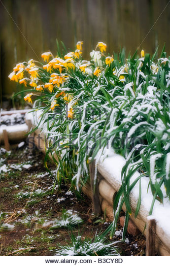 Ice Blossoms Stock Photos Ice Blossoms Stock Images Alamy