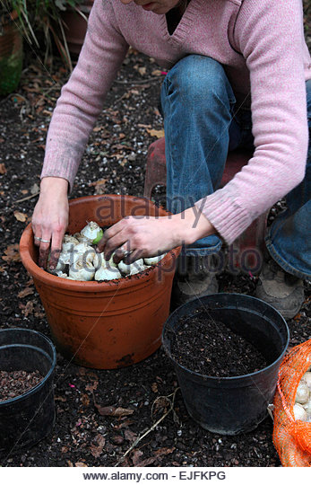 Terracotta pots autumn stock photos terracotta pots autumn stock images alamy - Planting hyacinths pots ...