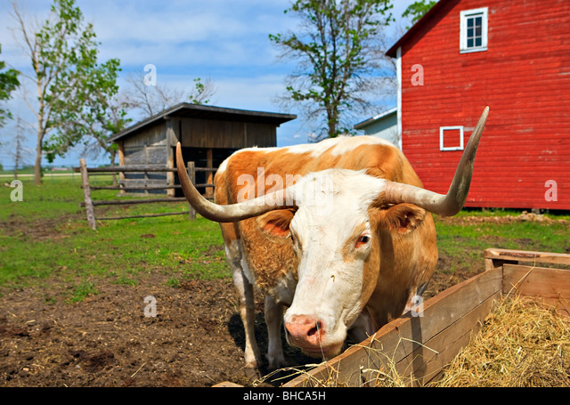 Bull Pen Stock Photos Amp Bull Pen Stock Images Alamy