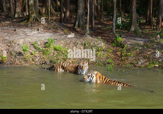 Cat Rescue Lake County Florida