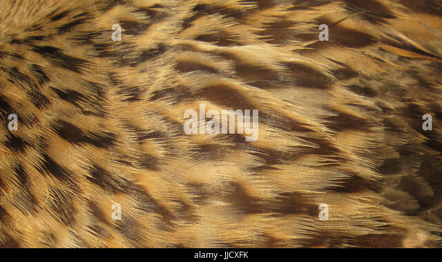 Backgrounds of brown and golden colored texture feathers of a bird. - Stock Image