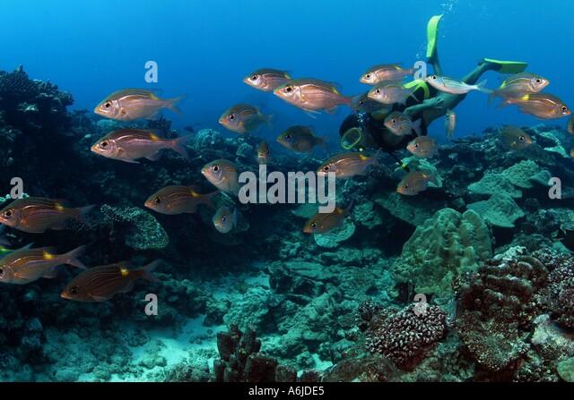Schooling In The Cook Islands
