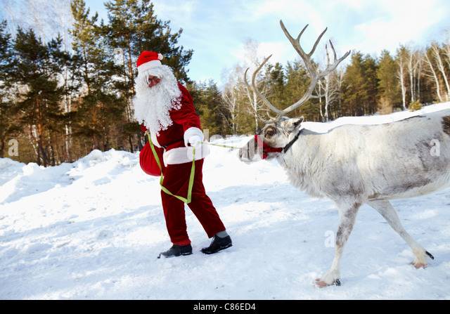 Reindeer sleigh stock photos