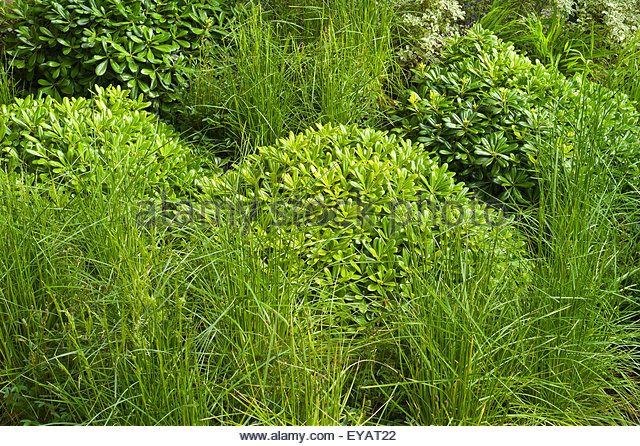 Planting scheme stock photos planting scheme stock for Grasses planting scheme