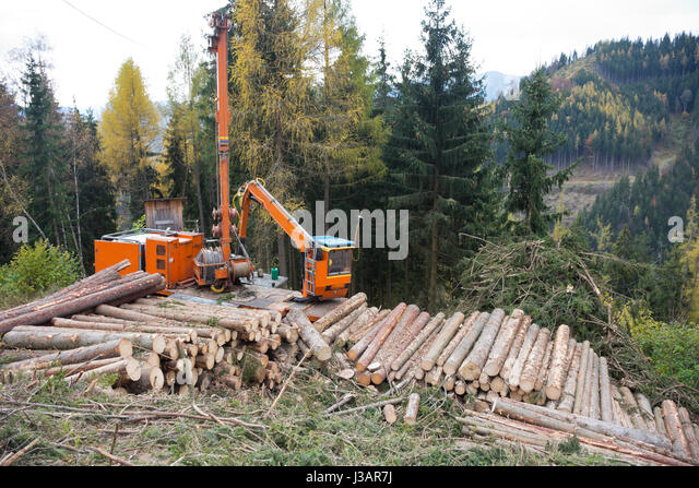 timber harvesting For landowners we can offer payment before cutting begins few people own woodlands because they want to cut trees timber harvesting, however, is one of the most.