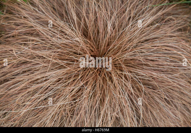 Perennial grass stock photos perennial grass stock for Mounding grass