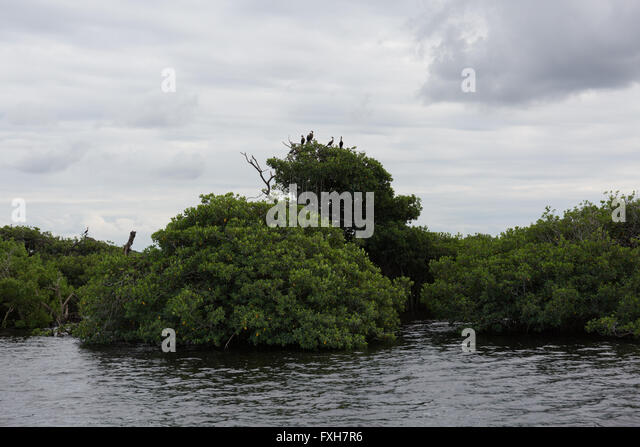 The caloosahatchee stock photos the caloosahatchee stock for Caloosahatchee river fishing