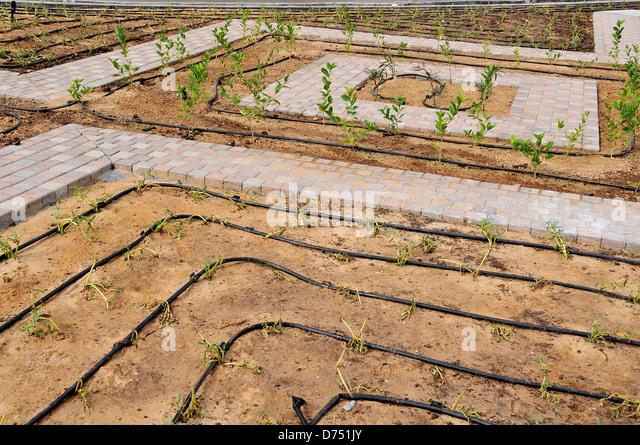Irrigation System Tree Stock Photos Amp Irrigation System
