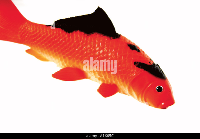 Koy carp stock photos koy carp stock images alamy for Rubber fish toy