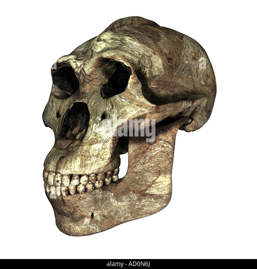 Paranthropus Stock Pho...
