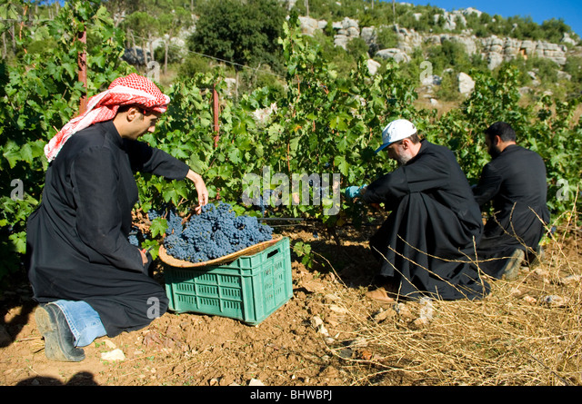 """middle eastern single men in farmer """"it was not one early population that sowed the seeds of farming in western  one  group of people—or just their ideas—spread farming early on  but the trail of  the first farmers went cold in the hot climate of the middle east,."""