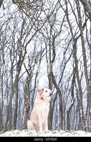 Little Orchard Dog Kennels
