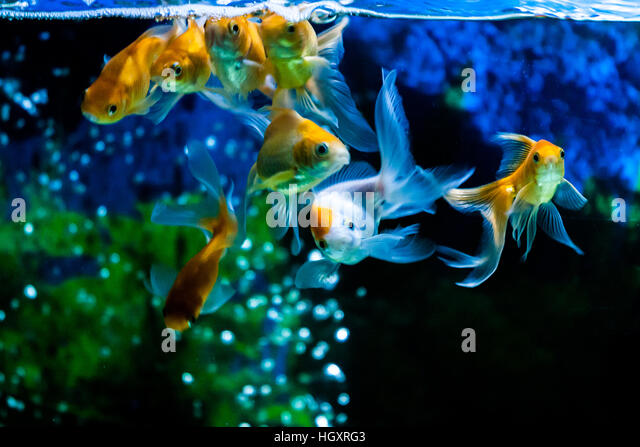 Aquarium Plants Stock Photos Aquarium Plants Stock