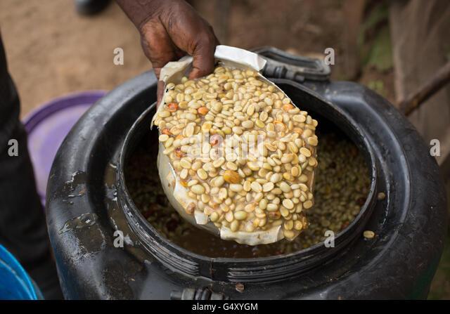 Fermenting Coffee Beans ~ Fermentation tank stock photos