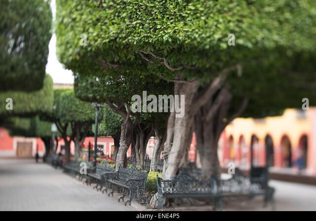 El bajio stock photos el bajio stock images alamy for Jardin san miguel de allende
