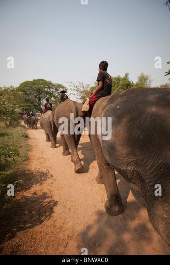 Elephantstay Stock Photos & Elephantstay Stock Images - Alamy