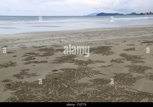 how to catch sand crabs at the beach