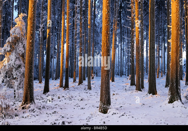forest in wi stock photos amp forest in wi stock images   alamy