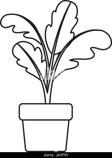 Illustration cartoon flower pot black and white stock photos black silhouette of beet plant in flower pot stock image mightylinksfo
