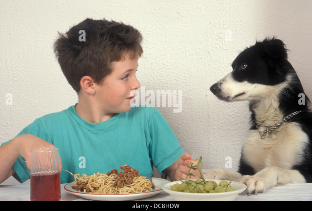 how to stop a dog jumping up at the table