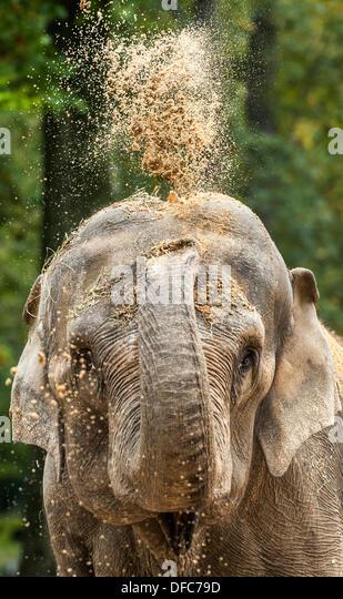 Muenster germany not fresh stock photos muenster germany for Designhotel elephant prague 1 czech republic