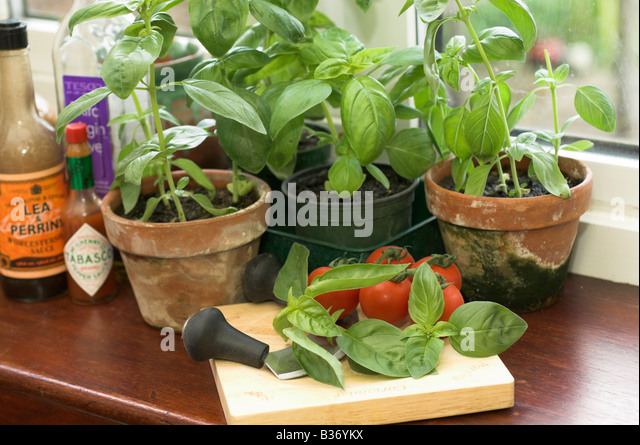 Herbs windowsill stock photos herbs windowsill stock Kitchen windowsill herb pots