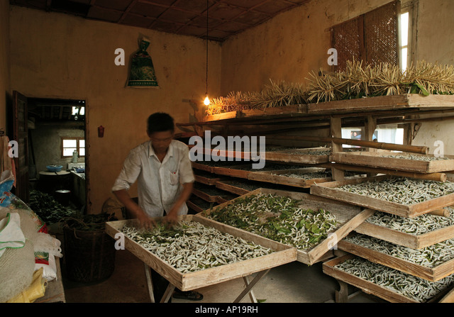 Chinese Silk Making | www.imgkid.com - The Image Kid Has It!