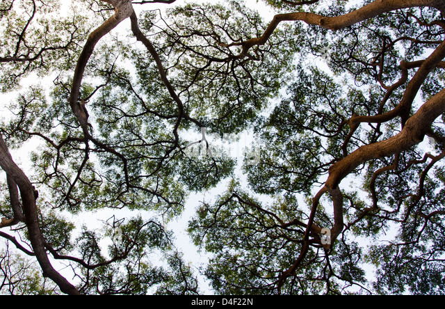 Tree canopy stock photos tree canopy stock images alamy for Canopy of trees