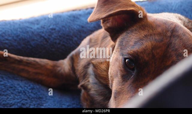Floppy Blue Dog With Orange Ears