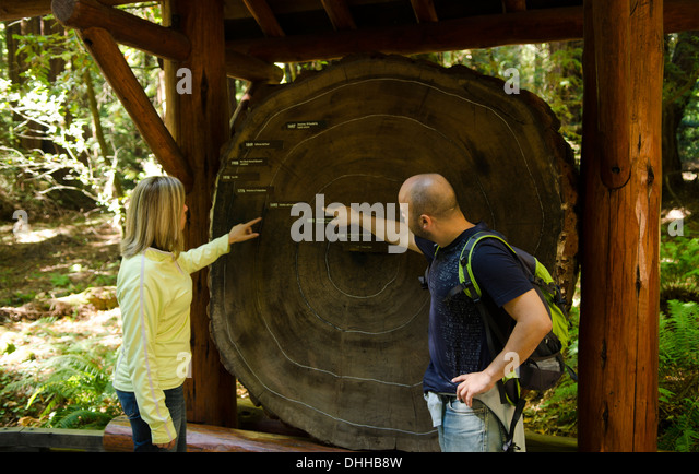 California tree ring dating redwood
