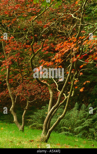 Scenic Sir Harold Hillier Garden Stock Photos  Sir Harold Hillier Garden  With Heavenly Acer Or Maple Trees In Autumn Sir Harold Hillier Gardens Near Romsey  Hampshire With Awesome Garden Mulch Also Greek Garden In Addition Princess Garden Vallejo And Garden Tool As Well As Gardening Videos Additionally Eating Covent Garden From Alamycom With   Heavenly Sir Harold Hillier Garden Stock Photos  Sir Harold Hillier Garden  With Awesome Acer Or Maple Trees In Autumn Sir Harold Hillier Gardens Near Romsey  Hampshire And Scenic Garden Mulch Also Greek Garden In Addition Princess Garden Vallejo From Alamycom