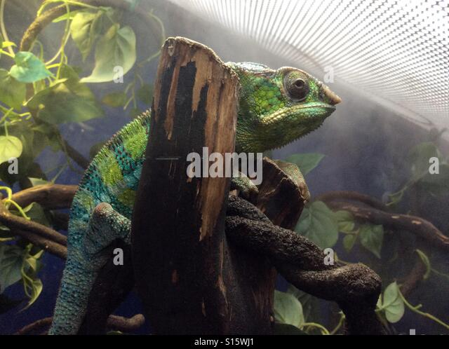 Oregon Zoo Stock Photos Oregon Zoo Stock Images Alamy