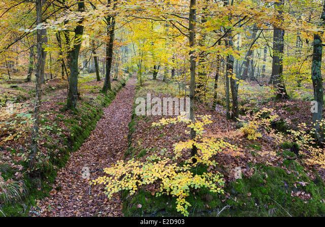 France Seine et Marne Fontainebleau forest La table du Roi area ditch around the Mare aux