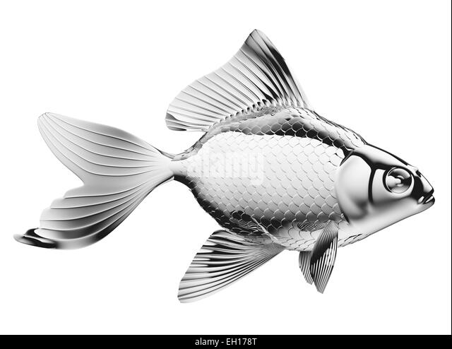 Chrome fins stock photos chrome fins stock images alamy for Fish with scales and fins
