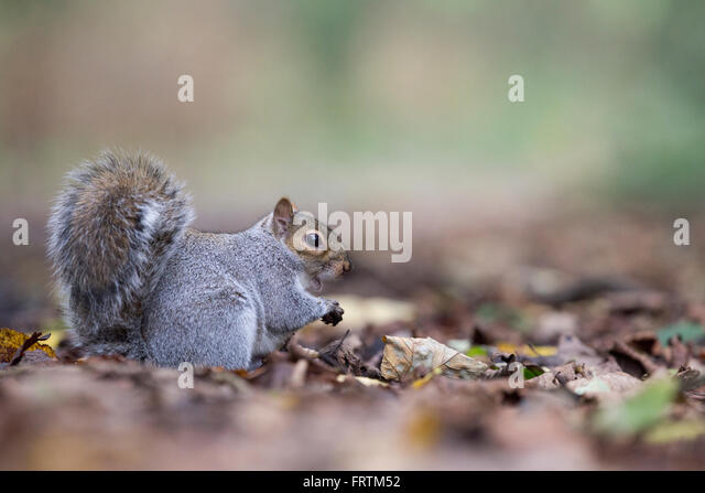 squirrel single girls Squirrel rar download,  - shy girls write it better some girls do it book 1  - short stories from hogwarts of heroism hardship and dangerous hobbies kindle single.