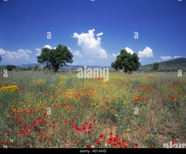 ow of trees stock photos ow of trees stock images alamy