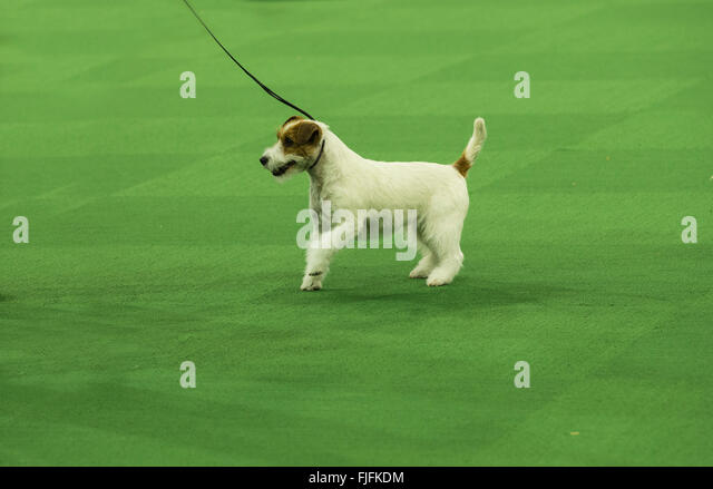 Kennel Club Stock Photos & Kennel Club Stock Images - Alamy