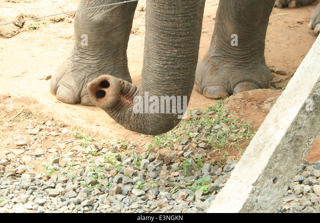 Elehant Nature Park