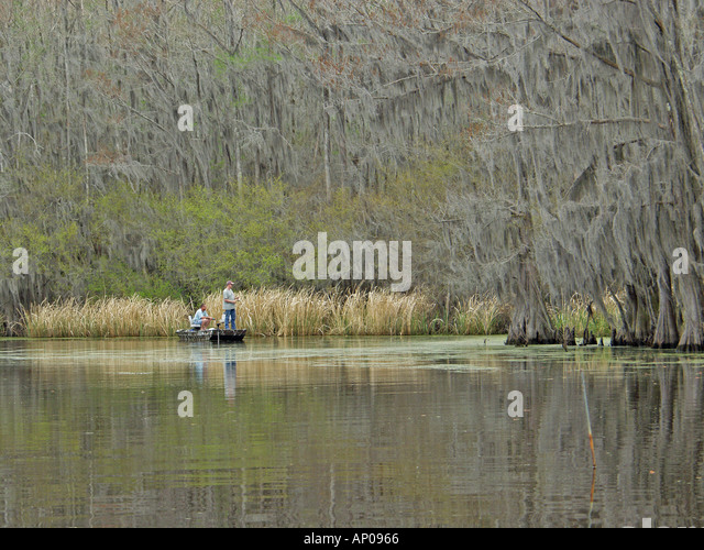 Cypress trees in caddo lake stock photos cypress trees for Caddo lake fishing