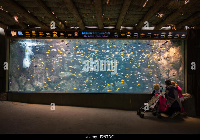 Giant fish tank stock photos giant fish tank stock for Large fish tank