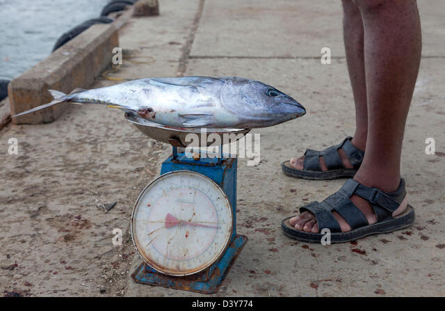 Micoud stock photos micoud stock images alamy for Fish weighing scales