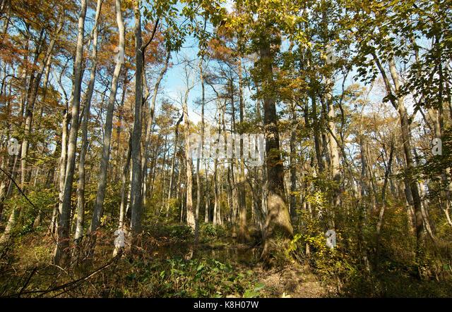 Rougarou Audubon Zoo - Swamp New Orleans Stock Photos & Swamp New