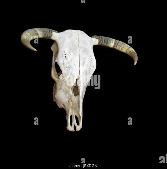 cow skull and desert - photo #26