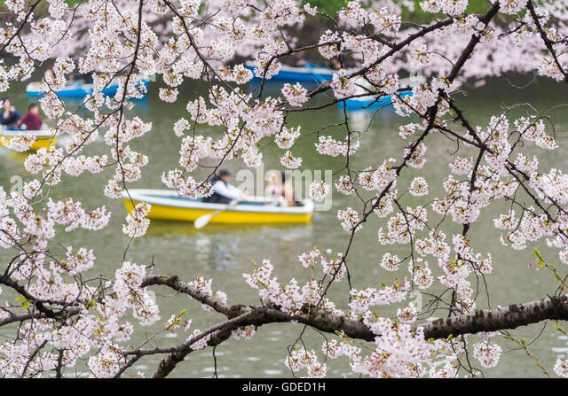 Kokyo Stock Photos & Kokyo Stock Images - Alamy
